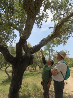Learning about cork trees in Portugal